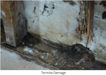 Salem Termite Damage